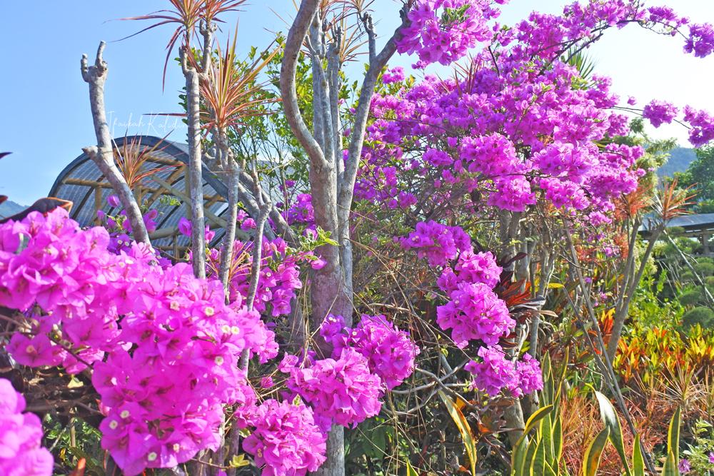 Wisata Bunga Sidomulyo